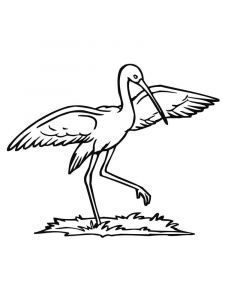Stork-birds-coloring-pages-8