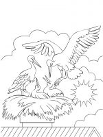 coloring-pages-Stork-7
