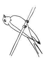 swallow-birds-coloring-pages-1