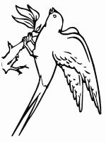 swallow-birds-coloring-pages-10