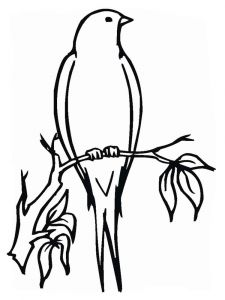 swallow-birds-coloring-pages-12