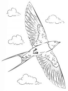 swallow-birds-coloring-pages-2