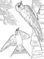 swallow-birds-coloring-pages-4