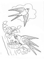 swallow-birds-coloring-pages-5