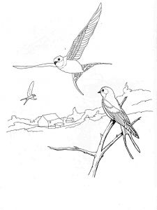 swallow-birds-coloring-pages-6