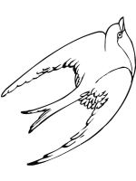 swallow-birds-coloring-pages-7