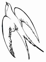 swallow-birds-coloring-pages-9