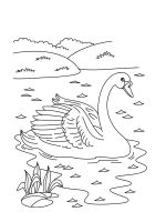 Swans-birds-coloring-pages-3