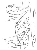 Swans-birds-coloring-pages-7