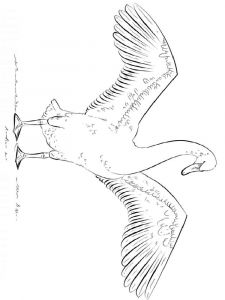 Swans-birds-coloring-pages-8