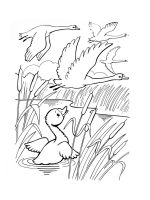 Swans-birds-coloring-pages-9