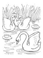 coloring-pages-Swans-10