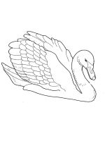 coloring-pages-Swans-11