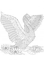 coloring-pages-Swans-6