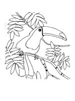 Toucan-birds-coloring-pages-1