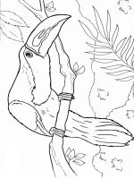 Toucan-birds-coloring-pages-10
