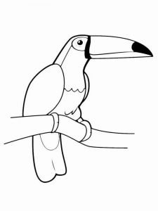 Toucan-birds-coloring-pages-11