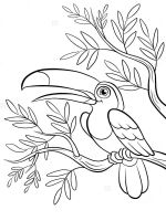 Toucan-birds-coloring-pages-12