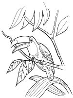 Toucan-birds-coloring-pages-13