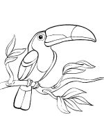 Toucan-birds-coloring-pages-14