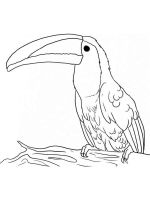 Toucan-birds-coloring-pages-6
