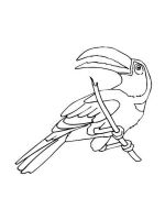 Toucan-birds-coloring-pages-8