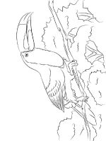 Toucan-birds-coloring-pages-9