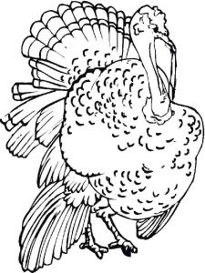 Turkeys-birds-coloring-pages-11
