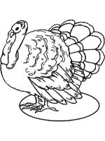 Turkeys-birds-coloring-pages-14