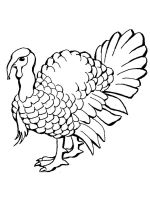 Turkeys-birds-coloring-pages-16