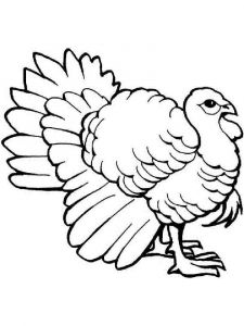 Turkeys-birds-coloring-pages-17