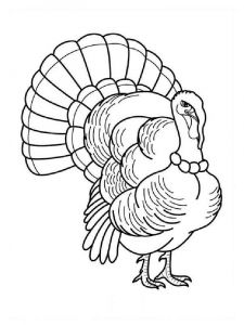 Turkeys-birds-coloring-pages-4