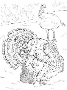 Turkeys-birds-coloring-pages-6