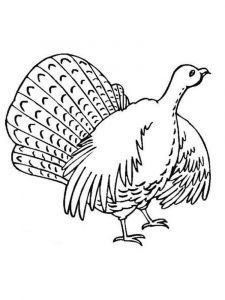 Turkeys-birds-coloring-pages-8