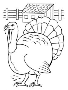 Turkeys-birds-coloring-pages-9