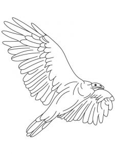 Vultures-birds-coloring-pages-11