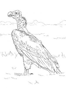 Vultures-birds-coloring-pages-4