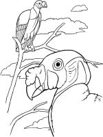 Vultures-birds-coloring-pages-5