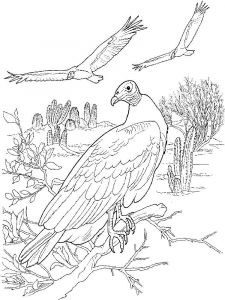 Vultures-birds-coloring-pages-7