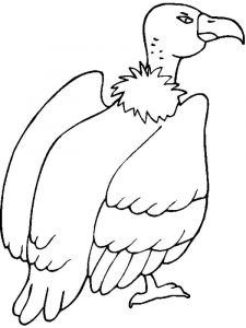 Vultures-birds-coloring-pages-9