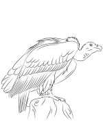 coloring-pages-Vultures-10