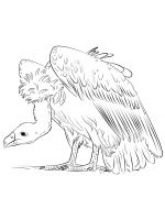 coloring-pages-Vultures-14