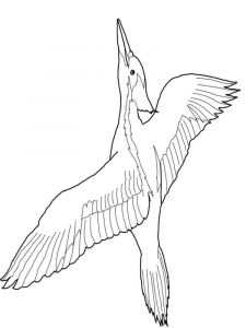Woodpeckers-birds-coloring-pages-11
