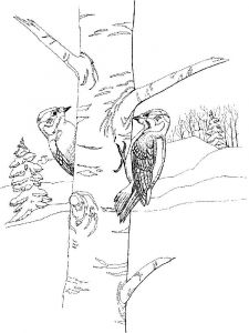 Woodpeckers-birds-coloring-pages-14