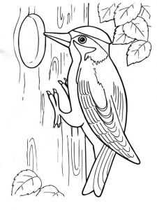 Woodpeckers-birds-coloring-pages-2