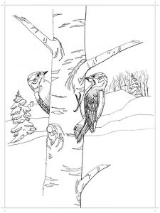 Woodpeckers-birds-coloring-pages-8