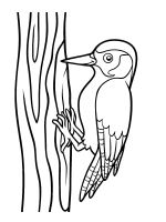 coloring-pages-Woodpeckers-1