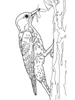 coloring-pages-Woodpeckers-10