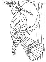 coloring-pages-Woodpeckers-3