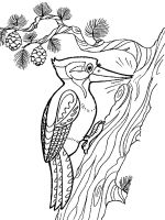 coloring-pages-Woodpeckers-4